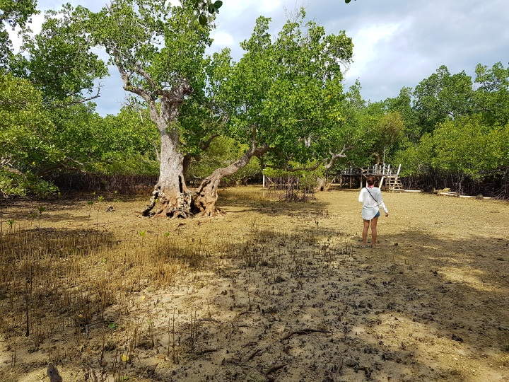 Mangroves in Sagay City